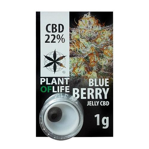 Hachís CBD Plant of Life 22%