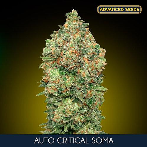 Auto Critical Soma