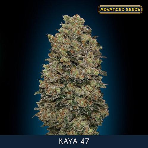 Kaya 47