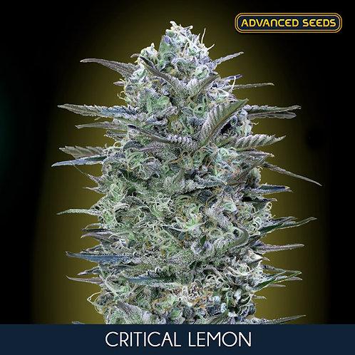 Critical Lemon