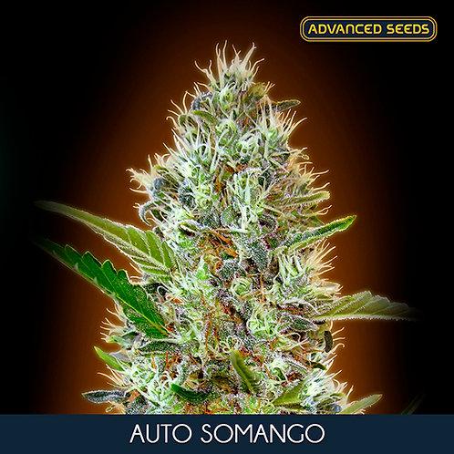 Auto Somango