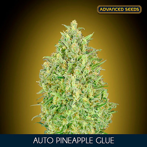 Auto Pineapple Glue