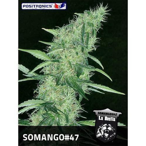 Somango #47
