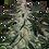 Thumbnail: Deimos