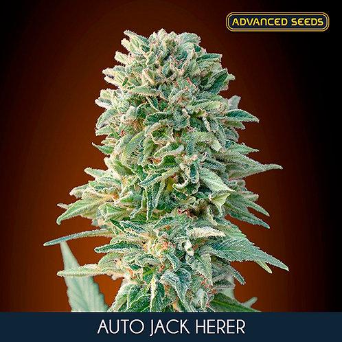 Auto Jack Herer