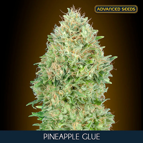 Pineapple Glue