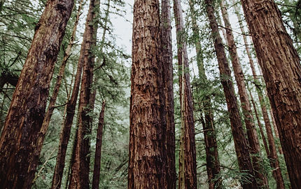 Redwood Regional Park. Explore Bay area as a part of your gcb11 experience