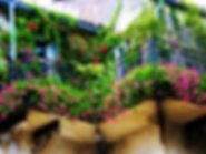 Balcony-Garden2.png