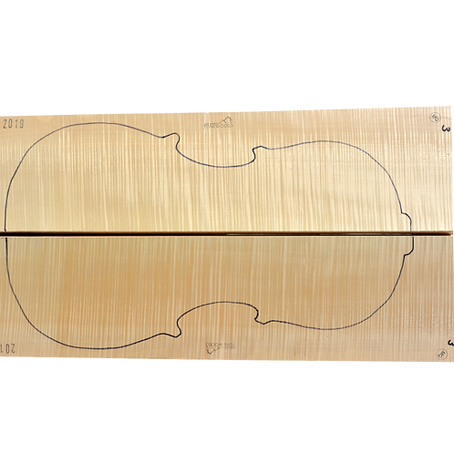 Flamed Maple   Cello back No.3