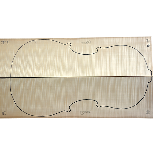 Flamed Maple | Cello back No.16