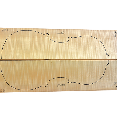 Flamed Maple   Cello back No.15