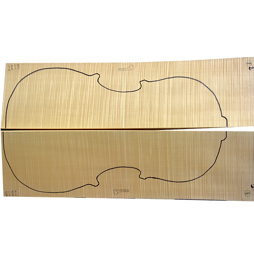 Flamed Maple | Cello back No.3