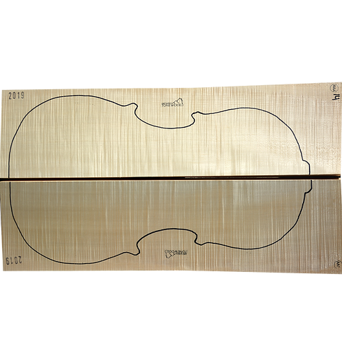 Flamed Maple | Cello back No.14