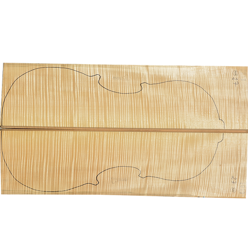 Flamed Maple | Cello back No.27