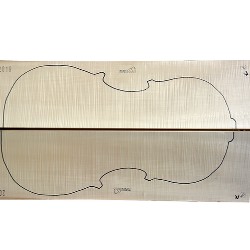 Flamed Maple   Cello back No.7