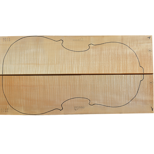 Flamed Maple | Cello back No.1