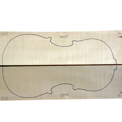 Flamed Maple | Cello back No.9