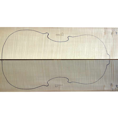 Flamed Maple | Cello back No.11