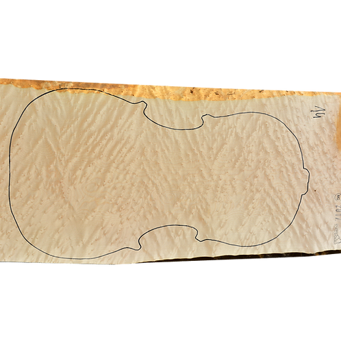 Birdseye Maple | Cello back No.14