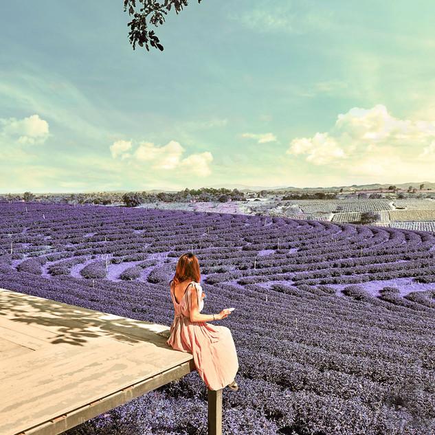 LavenderField_AppleC.jpg