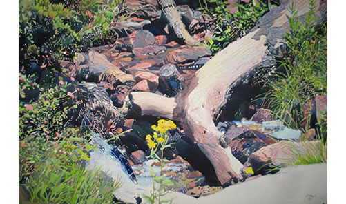 Fallen Tree/Yellow Flower - 35x50