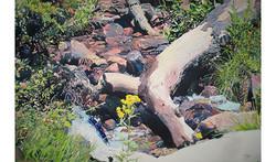 Fallen Tree/Yellow Flower - 35x50