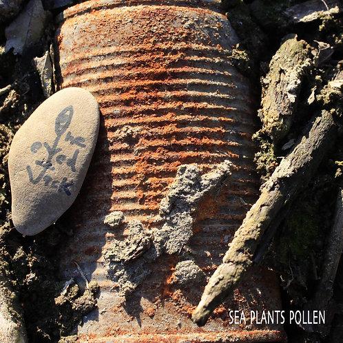 "One Eyed Jack - ""Sea Plants Pollen"""