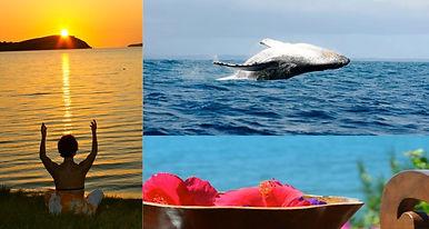 nosy be, baleines, séjour en conscience, voyage spirituel, méditation