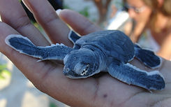 bb%20tortues_1695454_M_edited.jpg