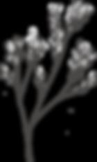 Botanicals_texture-14.png