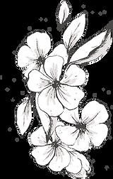 Botanicals_texture-06_2.png