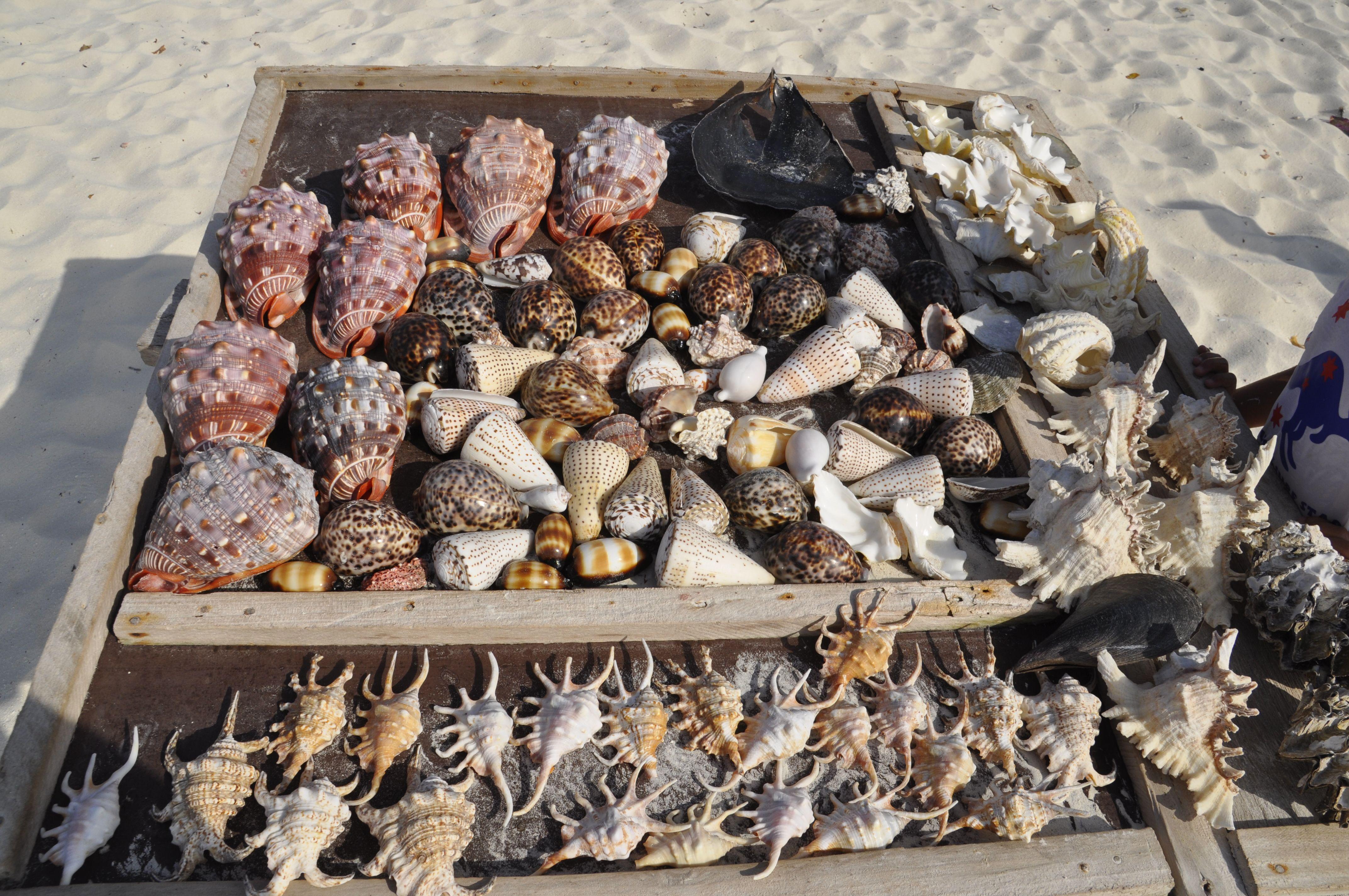 Tanzania Seashells