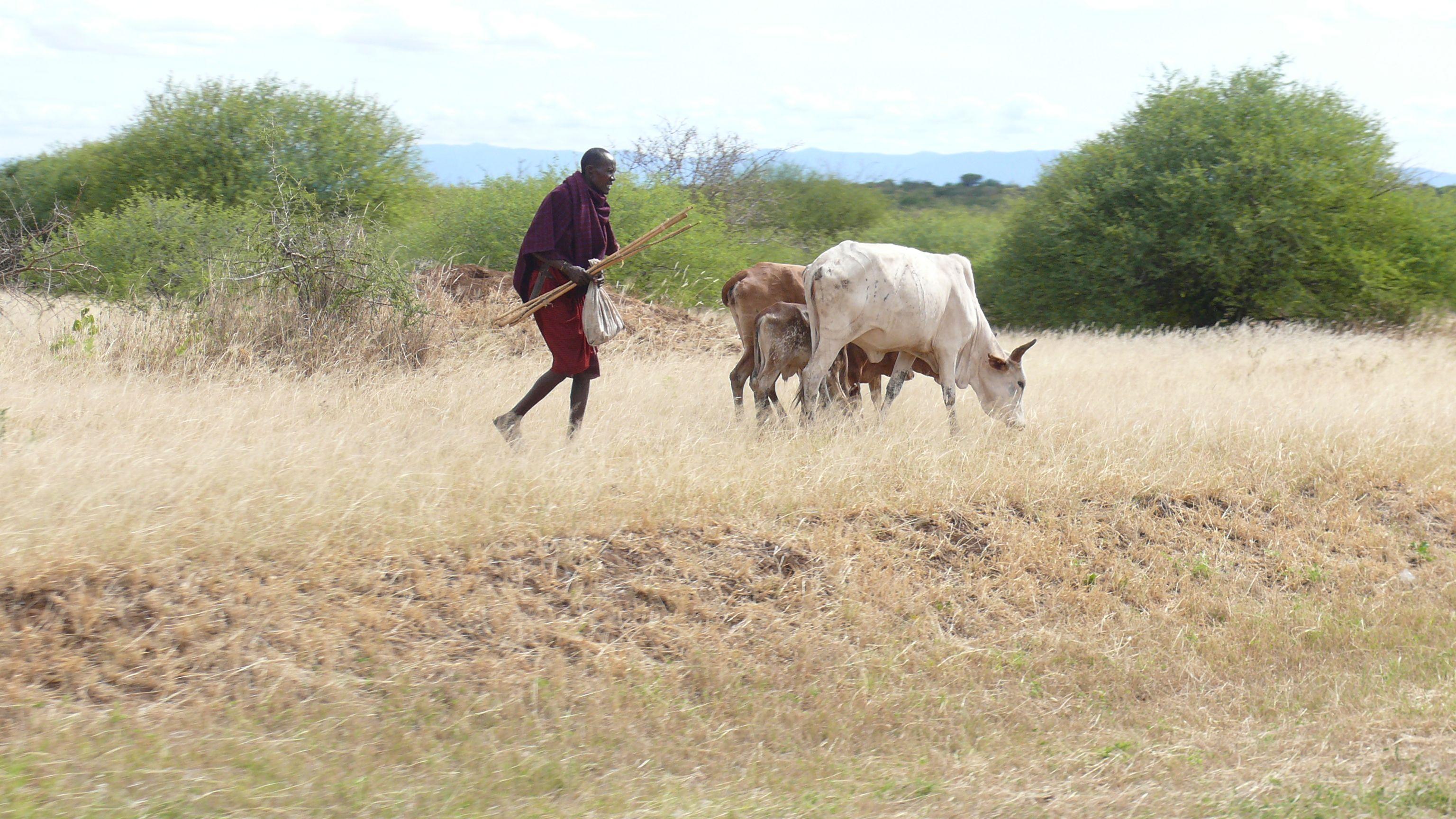 Masai Farmer