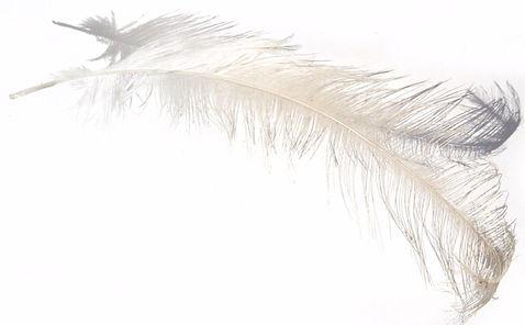 feather-609-1491081_edited_edited_edited