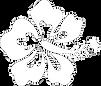 hibiscus-flower-hi_edited_edited_edited.