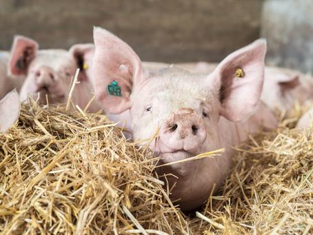 De Raad van State doet uitspraak: win-win-win situatie voor dier, boer en omgeving