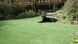 Artificial Lawn Grass Synthetic Pet Grass