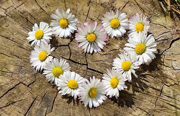 Fleur coeur.jpg