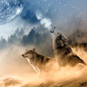 2 wolven: Verenig de tegengestelden in jezelf