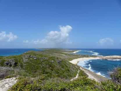 La Guadeloupe : 10% de la flore française