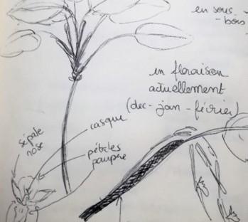 1. Sensibiliser à la richesse du patrimoine floristique de la Guadeloupe