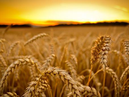 The Harvest Won't Wait