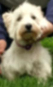 Winnie (2).jpg