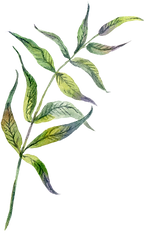 12-branch-leaves.png