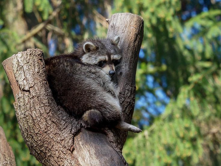 Tierfotografie im Wildpark Lüneburger Heide