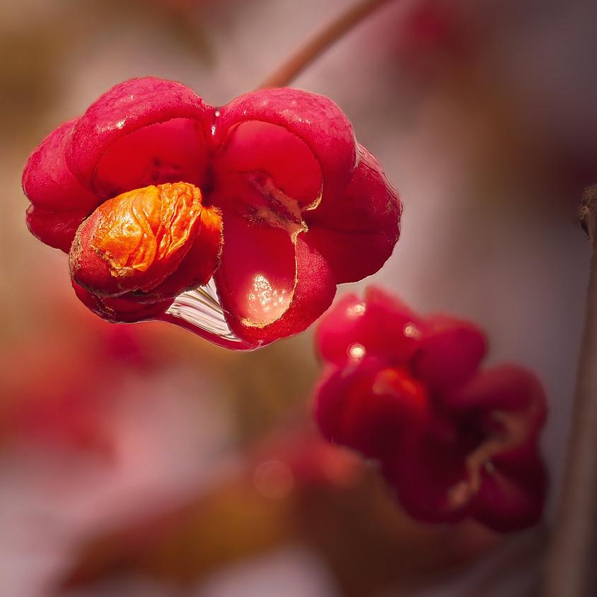 Fotoaufgabe - Setze ein Herbstblatt in Szene