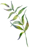 12-branch-leaves_edited.png