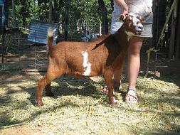 farm pix 205.jpg