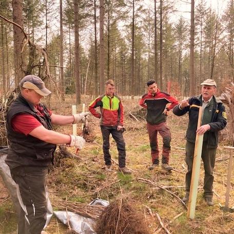 Ökologisches Projektmanagement Aufforstung