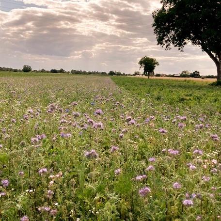 Ökologisches Projektmanagement Biodiversität
